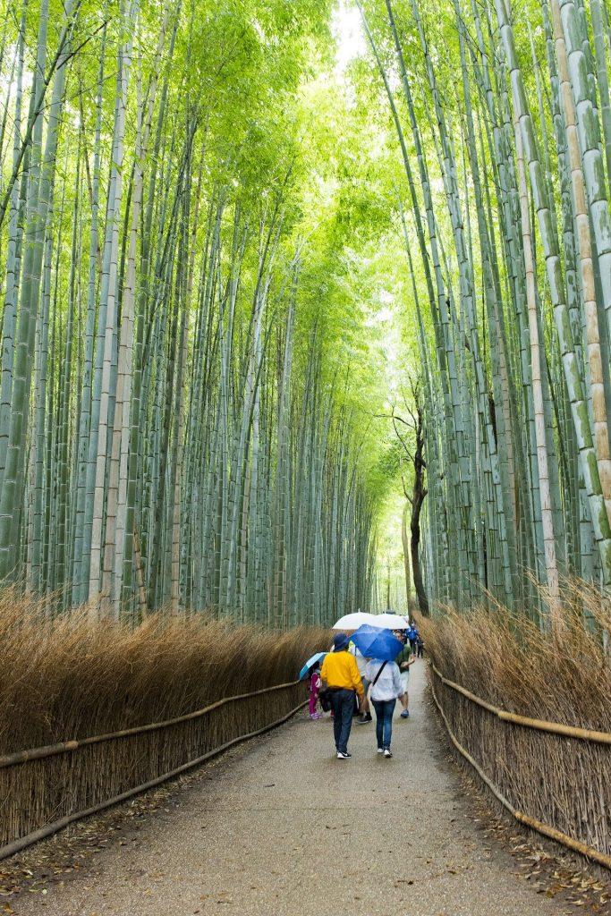 Arashiyama Bamboo Grove-Kyoto